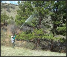 Tree Spraying from TigerTree