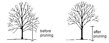 pruning to raise